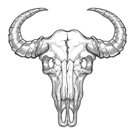 Buffalo skull vector sketch. Vintage hand drawn animals head skull