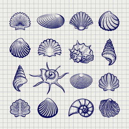 Ball pen sketch sea shells on notebook background vector Illustration
