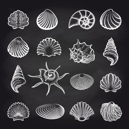 molluscs: Hand drawn sea shells on chalckboard background vector Illustration