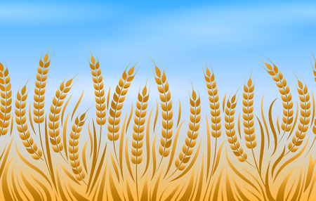 Field of wheat, vector natural golden bread landscape background