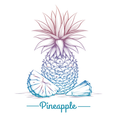 anaglyph: Colorful pineapple sketch isolated on white background. Vector illustration