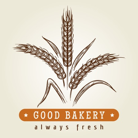 Good bakery hand drawn logo. Drawing sketch wheat ears retro emblem, vector illustration