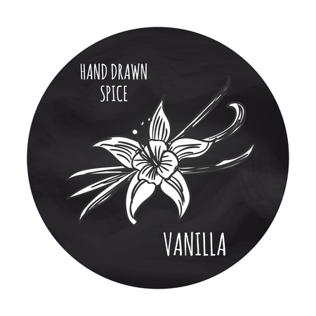 Hand drawn spice vanilla on blackboard, vector illustration. Black and white drawing illustration