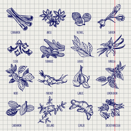 Hand drawn spices and herbs sketch collection on notebook page background. Vector illustration