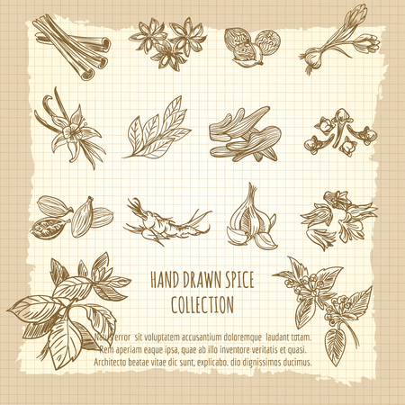 Vintage kitchen poster with hand drawn spice collection. Vector illustration Ilustracja
