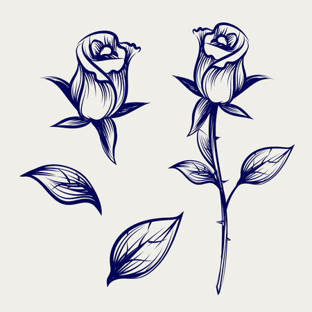 Vintage sketch rose flower, bud of rose and leaves isolated on gray backdrop. Vector illustration