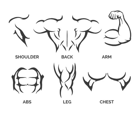 Bodybuilder muscles vector illustration. Healthy and muscular fitness body parts icons Illustration
