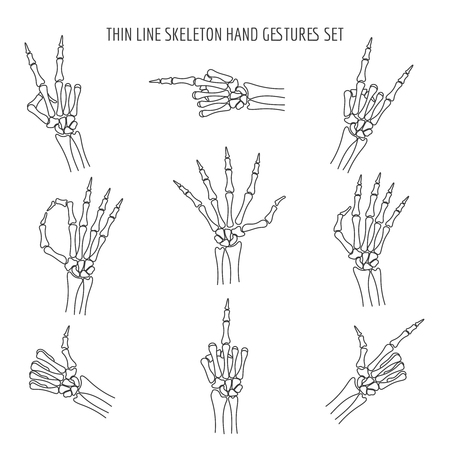 Vector linear skeleton hands gestures. Finger and pointer, ok and rock xray thin line hand bones isolated on white background