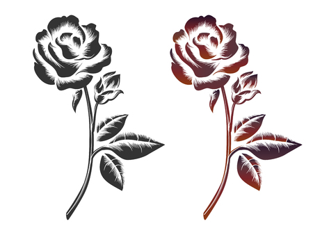 gently: Hand drawn roses on white background. Vector icons of black and wine color roses Illustration