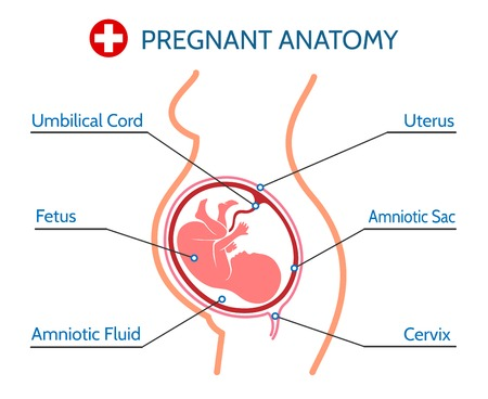 Pregnant woman with fetus in womb Illustration