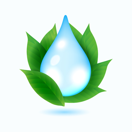 Drop of water and green leaves on white background, vector illustration