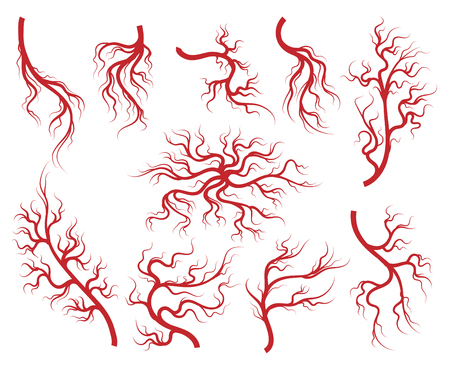 Veins vector. Vessel and capillary, artery and vein isolated on white background