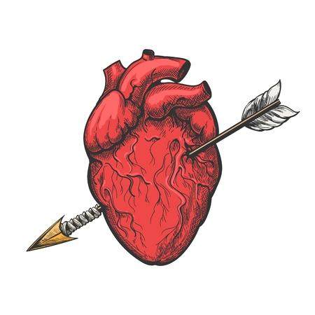 Cuore umano con disegno a freccia. Illustrazione di vettore di incisione del tatuaggio del cuore di amore reale di vettore