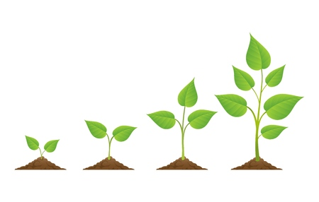 Plants grow isolated on white background or plant seed, growing and cultivation vector illustration
