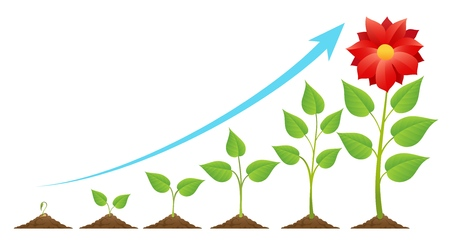 Seedling  growing in to a flower. Planting timeline or growing stages cycle, green sprout on ground vector illustration