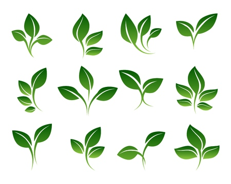 Green sprouts. Growing plants signs isolated on white background, vector sprouting shoots with green leaves symbols Stock Photo