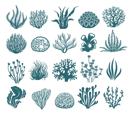 Seaweeds and coral silhouettes. Vector aquarium algae graphic isolated on white background, sea underwater black and white plants 일러스트