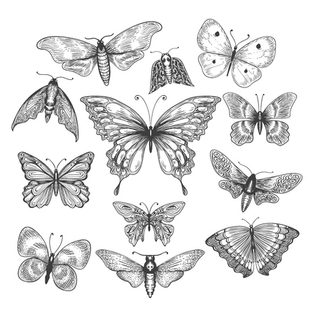 Butterfly, mariposa sketch. Vector illustration farfalle butterflies isolated on white background Stock Photo