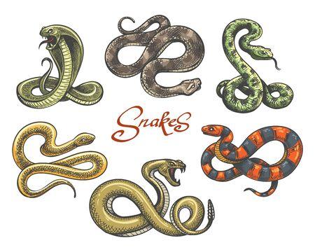 Vettore del tatuaggio del serpente. Tatuaggi di serpenti colorati su bianco, vipera vintage e serpente malvagio cobra illustrazione vettoriale