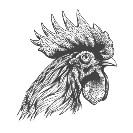 Rooster head engraving. Hand drawn cock portrait silhouette vector illustration, rooster chicken bantam mascot face sketch isolated on white background