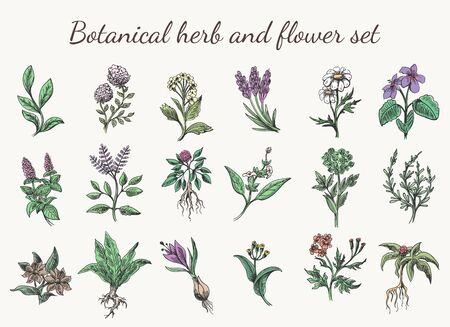 Vintage color herbs and flowers drawing. Colorful spring botanical cartoon herb and flower set sketch vector illustration isolated on white background