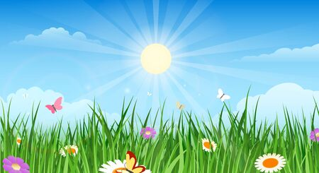 Summer country garden landascape. Spring meadow scenic drawing image, countryside valley with green grass pasture, beautiful blue sky and clouds, flowers and butterflies, vector illustration