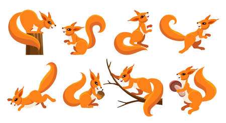 Funny squirrel set. Cartoon cute rodents, flat mammals of wildlife with nuts, vector illustration mascots of emotions of squirrels isolated on white background
