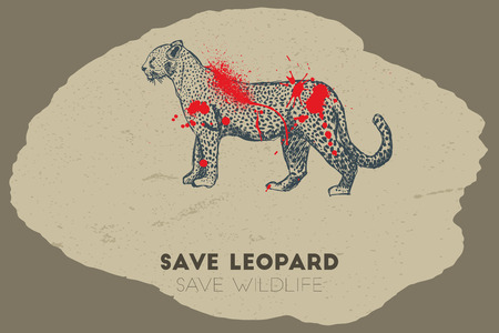 gun shot: Save leopard save wildlife. Gun shot with blood over leopard. Illustration
