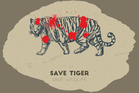 gun shot: Save tiger save wildlife. Gun shot with blood over tiger.