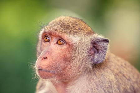 pity: Portrait of Monkey head shot looking away.