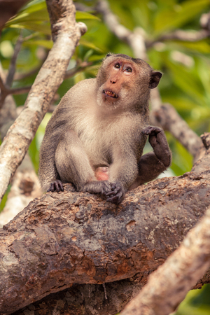 Monkey sitting on tree and using feet to scratch his body.