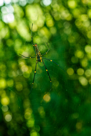 A Spider hanging on web with nice green bokeh background.