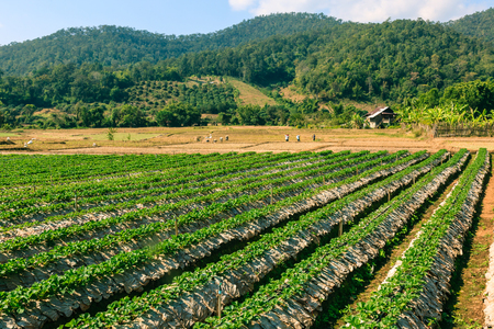 Agriculture field of mix organic product farm and working farmers. Stock Photo