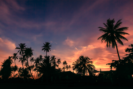 Silhouette of coconut trees against dramatic sunset sky background.