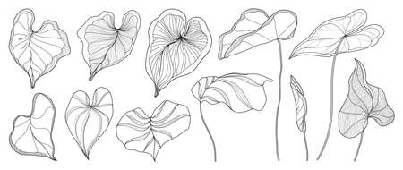 Exotic tropical leaf hand drawn vector. Araceae leaves black and white engraved ink art. Design for fabric, textile print, wrapping paper, fashion, interior design and cover.