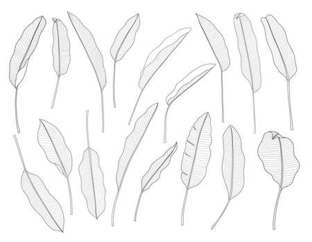 Exotic tropical leaf hand drawn vector. Botanical leaves, Canna leaves, banana leaf, black and white engraved ink art. Design for fabric, textile print and wrapping paper. Ilustração
