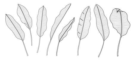 Exotic tropical leaf hand drawn vector. Botanical leavesมbanana, Canna leaves, banana leaf, black and white engraved ink art. Design for fabric, textile print, wrapping paper, fashion, interior design and cover.