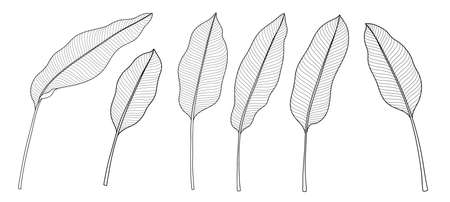 Exotic tropical leaf hand drawn vector. Botanical leavesมbanana, Canna leaves, banana leaf, black and white engraved ink art. Design for fabric, textile print, wrapping paper, fashion, interior design and cover. Stockfoto - 151123315