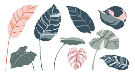 Tropical leaves and abstract exotic plan vector design elements on the white background.