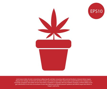 Red Medical marijuana or cannabis plant in pot icon isolated on white background. Marijuana growing concept. Hemp potted plant. Vector Illustration Illustration