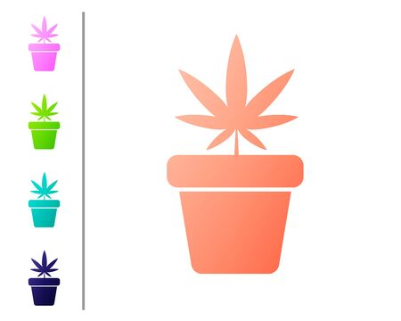 Coral Medical marijuana or cannabis plant in pot icon isolated on white background. Marijuana growing concept. Hemp potted plant. Set color icons. Vector Illustration