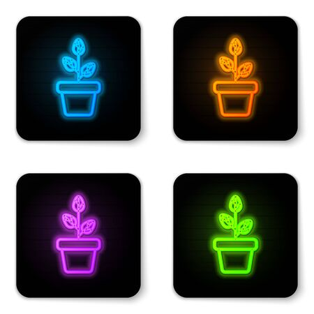 Glowing neon Flowers in pot icon isolated on white background. Plant growing in a pot. Potted plant sign. Black square button. Vector Illustration
