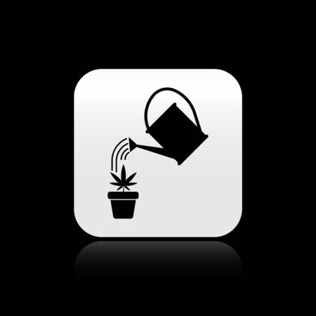 Black Watering can sprays water drops above marijuana or cannabis plant in pot icon isolated on black background. Marijuana growing concept. Silver square button. Vector Illustration