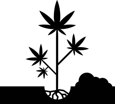 Black Planting marijuana or cannabis plant in the ground icon isolated on white background. Marijuana growing concept. Hemp symbol. Vector Illustration Illustration