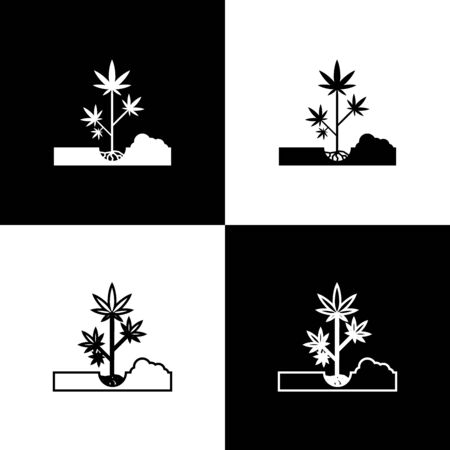 Set Planting marijuana or cannabis plant in the ground icon isolated on black and white background. Marijuana growing concept. Hemp symbol. Vector Illustration