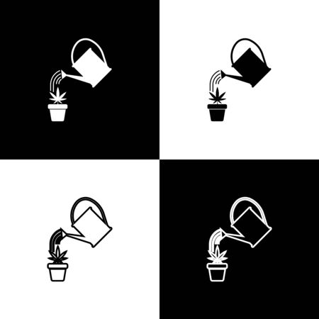 Set Watering can sprays water drops above marijuana or cannabis plant in pot icon isolated on black and white background. Marijuana growing concept. Vector Illustration Иллюстрация
