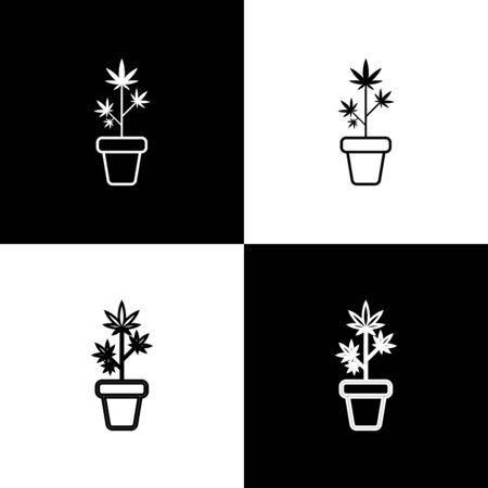 Set Medical marijuana or cannabis plant in pot icon isolated on black and white background. Marijuana growing concept. Hemp potted plant. Vector Illustration
