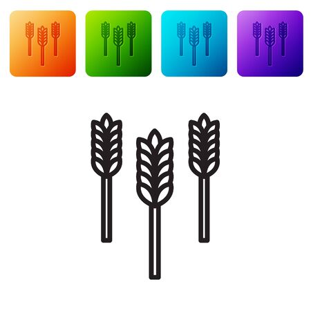 Black line Cereals set with rice, wheat, corn, oats, rye, barley icon isolated on white background. Ears of wheat bread symbols. Set icons in color square buttons. Vector Illustration
