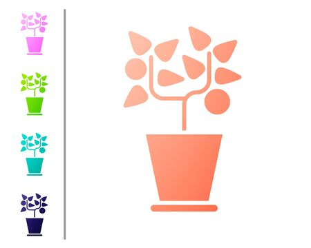 Coral Plant in pot icon isolated on white background. Plant growing in a pot. Potted plant sign. Set color icons. Vector Illustration