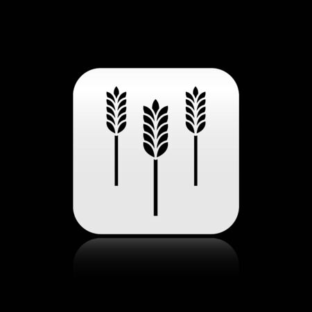 Black Cereals set with rice, wheat, corn, oats, rye, barley icon isolated on black background. Ears of wheat bread symbols. Silver square button. Vector Illustration